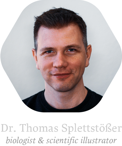 Dr. Thomas Splettstoesser